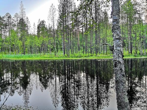 Talkoolaisena Pyhä-Luoston kansallispuiston upeissa maisemissa